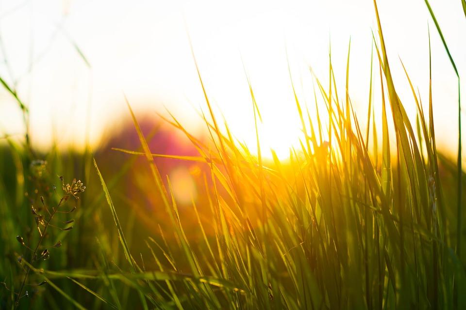 grass-1845783_960_720